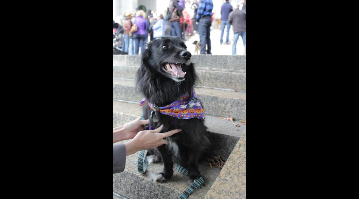 A dog poses on the steps of The Basilica before processing in to the Blessing of the Animals Oct. 4, 2015.