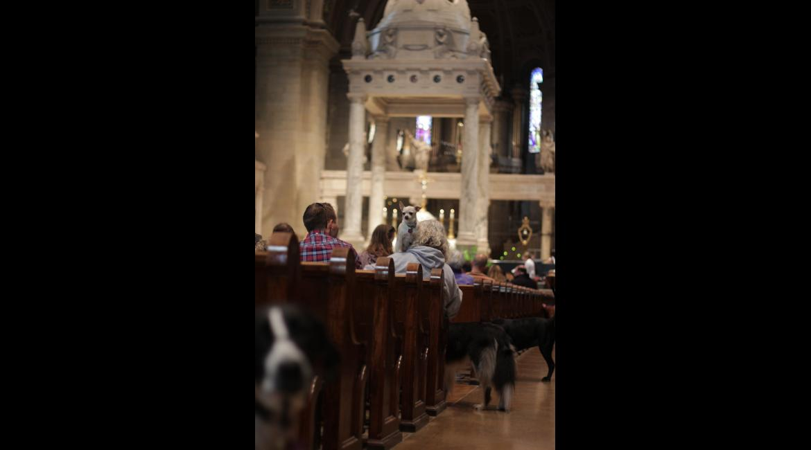Dogs peak through the aisles during the Blessing of the Animals service Oct. 4, 2015.