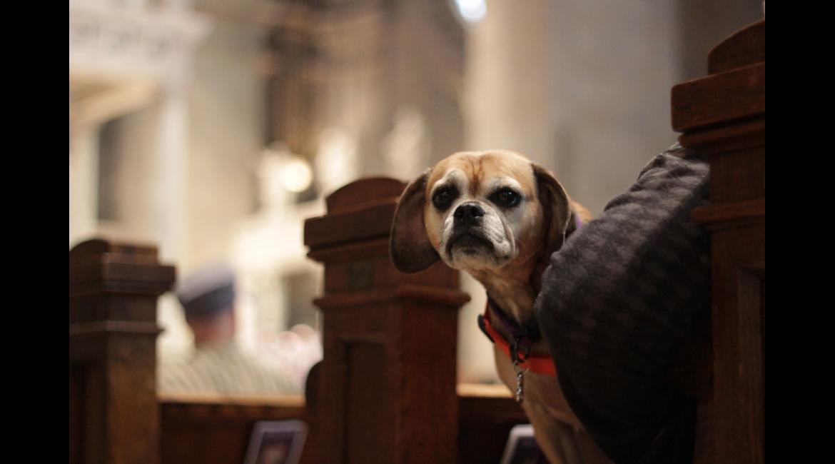 A dog looks over the shoulder of her owner during the Blessing of the Animals service Oct. 4, 2015, at The Basilica.