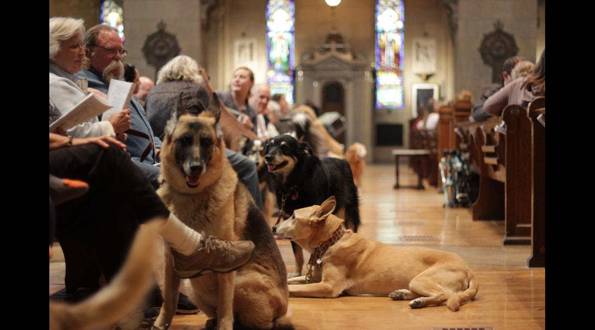 Dogs lay in the aisles during the Blessing of the Animals Oct. 4, 2015, at the Basilica.